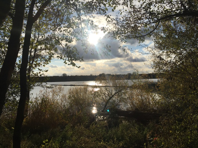 Natur Wandern an der Elbe
