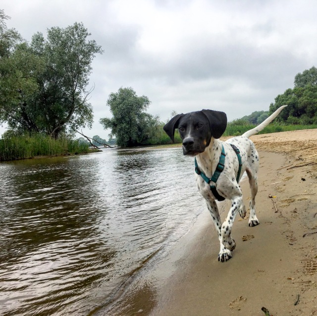 Hund Cosmo am Strand