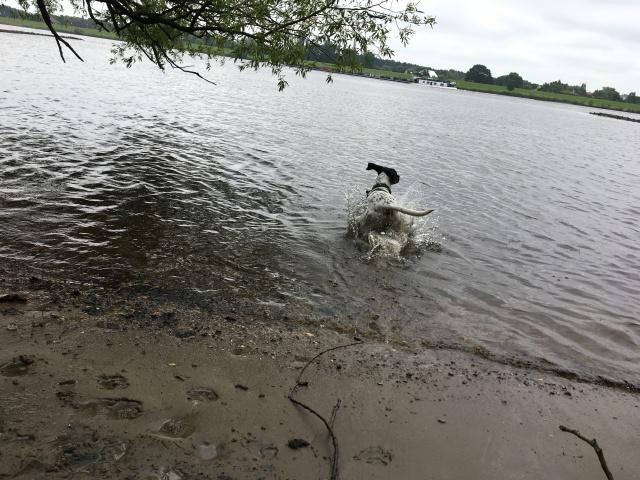 Hund Cosmo geht schwimmen