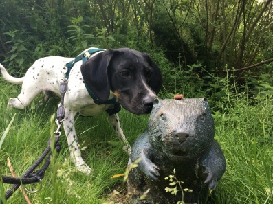 Hund Cosmo frisst Leckerlie vom Biber