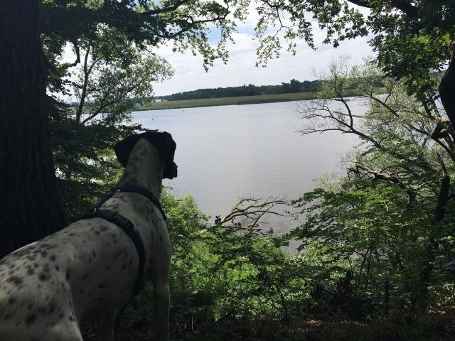 Hund hält Ausschau