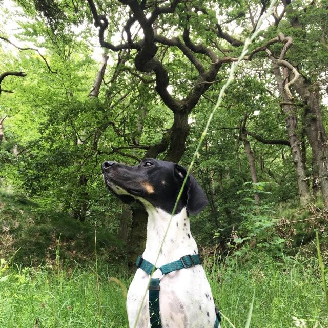 Hund Cosmo in der Natur