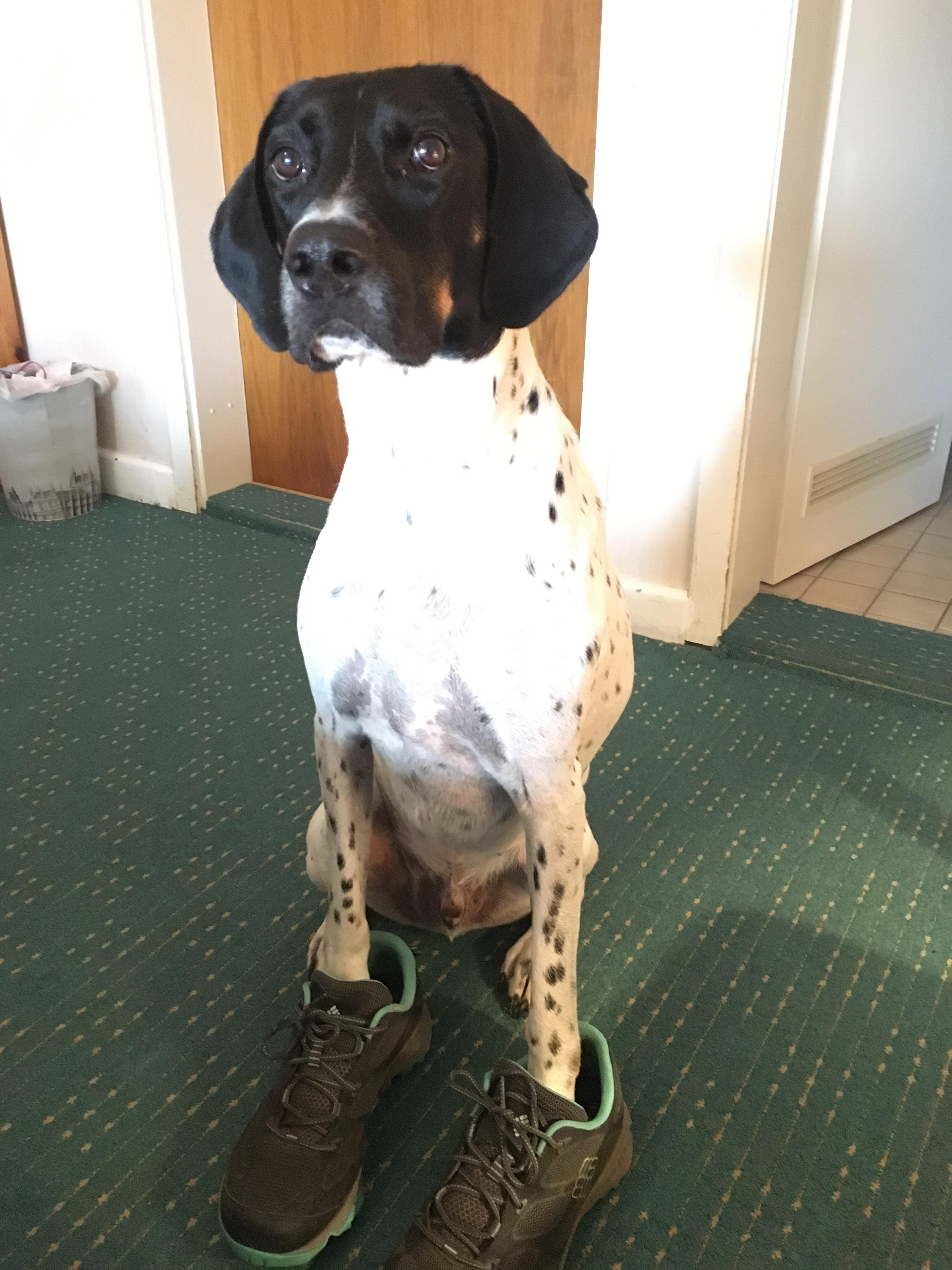 Hund in Wanderschuhen